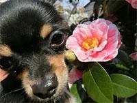 ペットホテルの庭の花