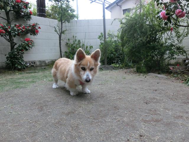 湘南茅ヶ崎ペットホテル、老犬介護もお任せ!