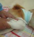 犬の介護ケア