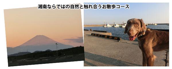 湘南の犬のお散歩コース