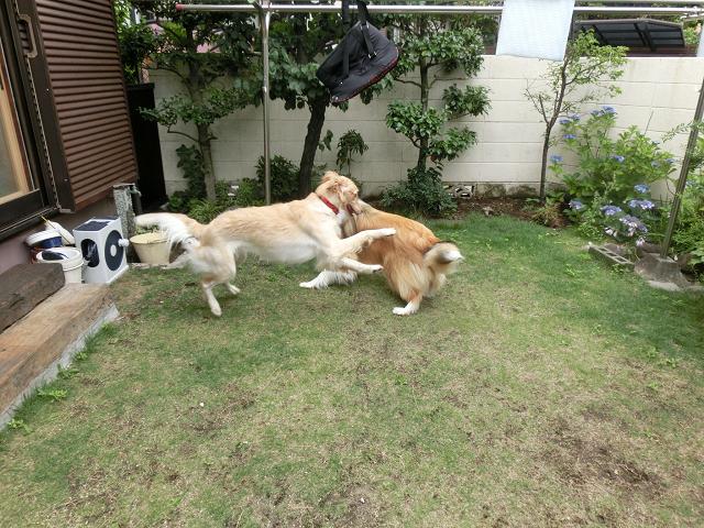 犬の保育園の仲間たち!