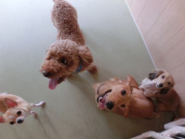 犬の保育園、ペットホテルの楽しい仲間たち