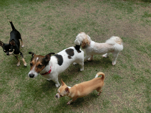 ペットホテル、犬の保育園、定期/長期お預かり、仲良しミーティングです。
