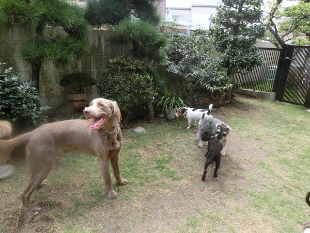 ペットホテル、犬の保育園、みんな仲良く涼しい潮風に戯れています!