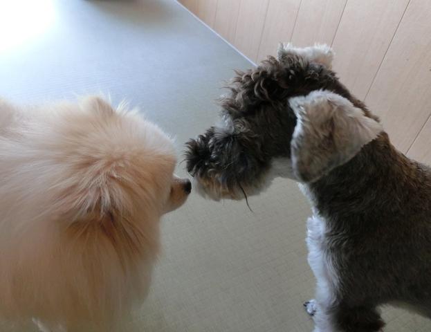 湘南のペットホテル、長期お預かり、初めましてで、仲良しです!