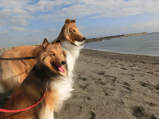 湘南ペットホテル、長期お預かり、仲良しと一緒の海岸のお散歩!