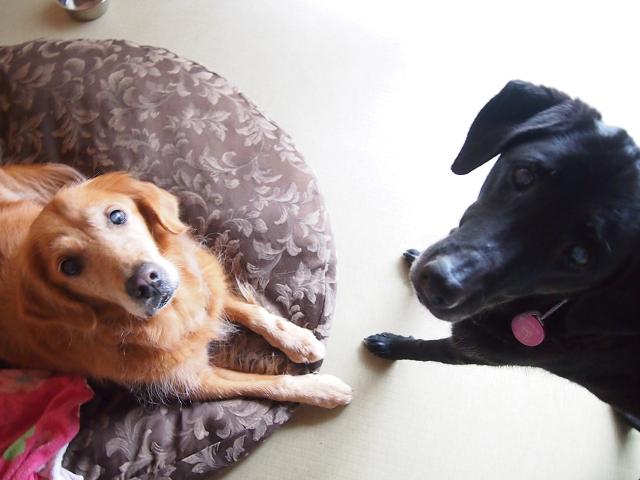 湘南ペットホテル、老犬介護、私たちオールディーズです!