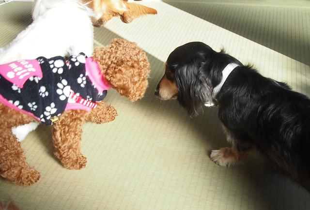 湘南ペットホテル、犬の保育園、初めまして!