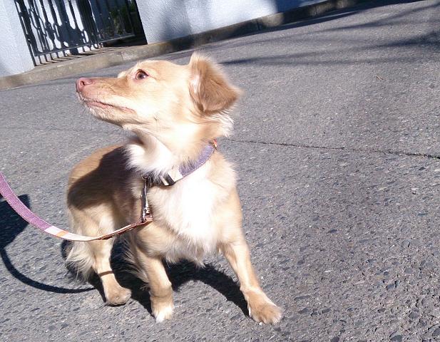 湘南ペットホテル、犬の保育園、自然にアイコンタクト!