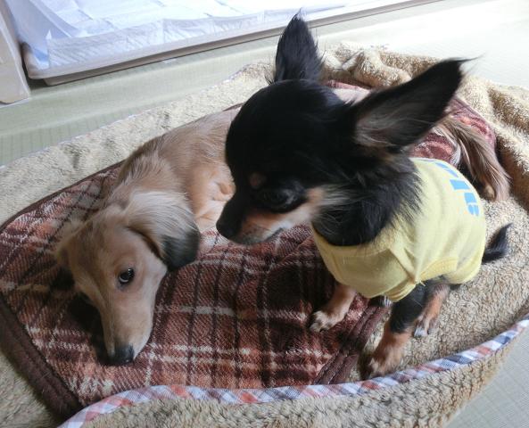 湘南ペットホテル、長期/定期お預かり、犬の保育園、なかよしこよし!