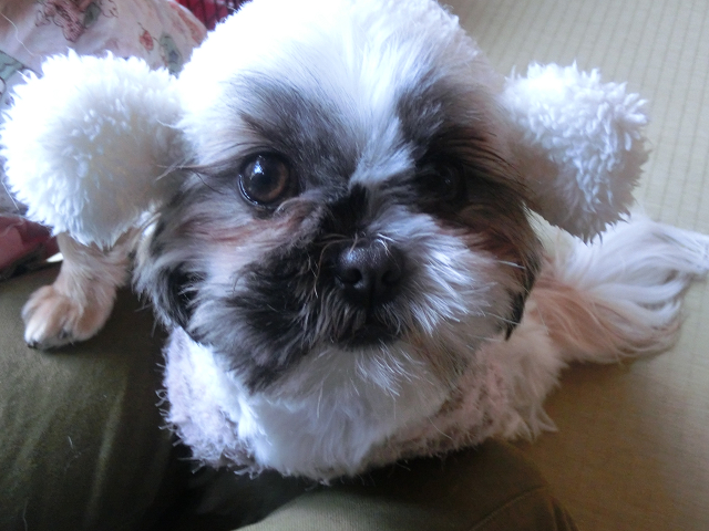 湘南ペットホテル、長期/定期お預かり、私は何犬でしょう?