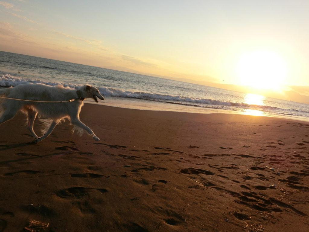 湘南ビーチ 犬のお散歩 夕日