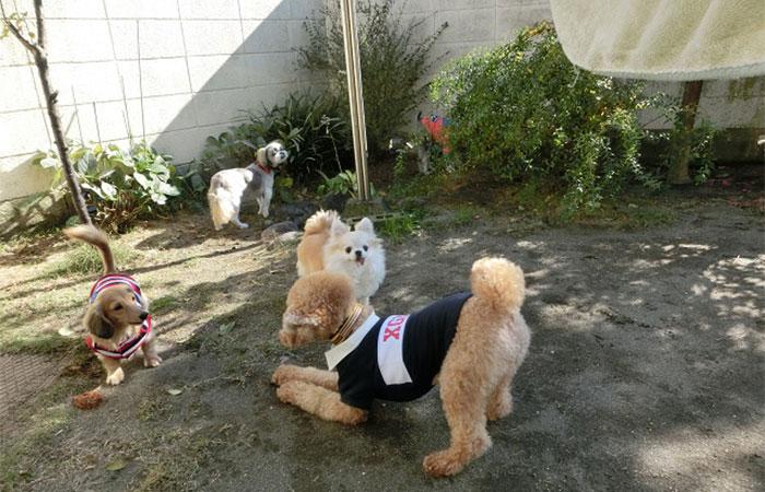 ペットホテル 庭遊び