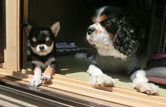 老犬と子犬と仲良く日向ぼっこ