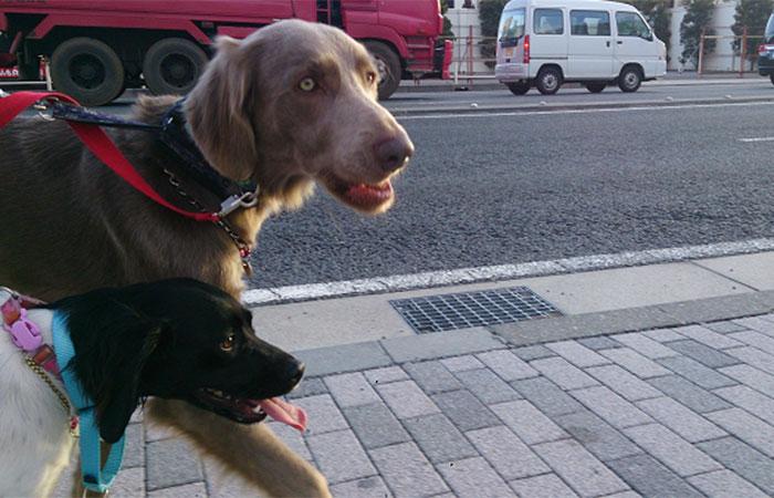 成犬 犬の社会化 犬の学童保育