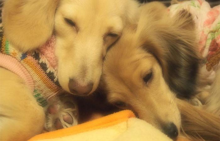 犬の保育園 仲良し 犬の社会化