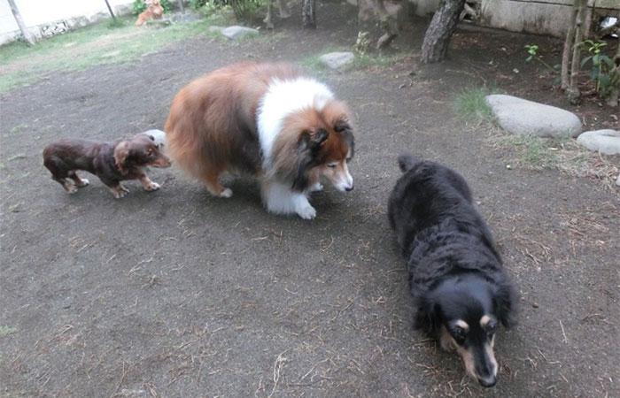 犬同士の遊び 犬の社会化