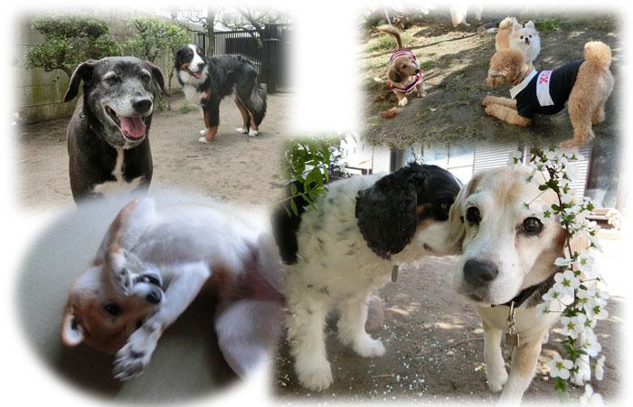 パピーからシニア犬まで安心のお預かり
