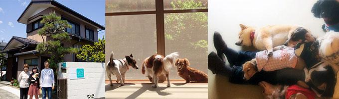 湘南、茅ケ崎のペットホテル、外観、室内、犬たち