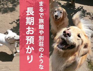 犬の長期預かり