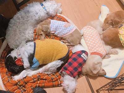 お預かり中の犬たち みんなで昼寝