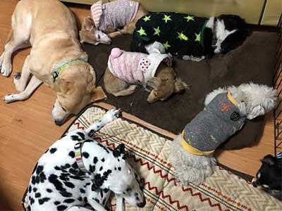 仲良く過ごす 犬 ペットホテル