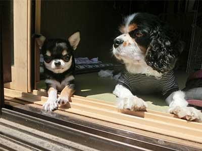 日向ぼっこする犬たち