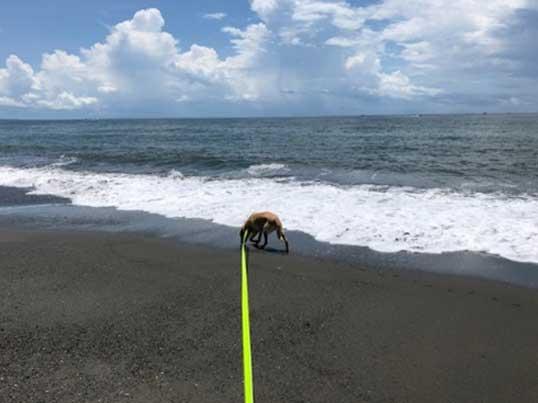 湘南 茅ケ崎海岸 散歩